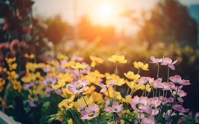 10+ Spring Gardening Tips from Experts that You Must not Miss