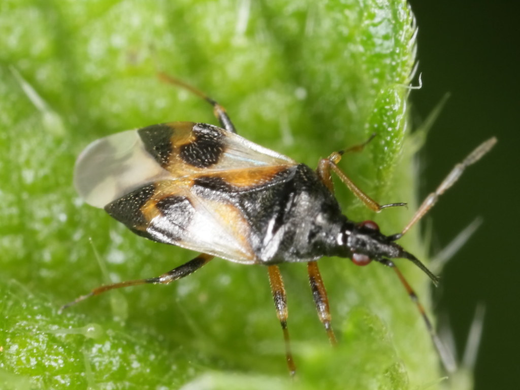 Top 23 Beneficial Insects For Your Garden