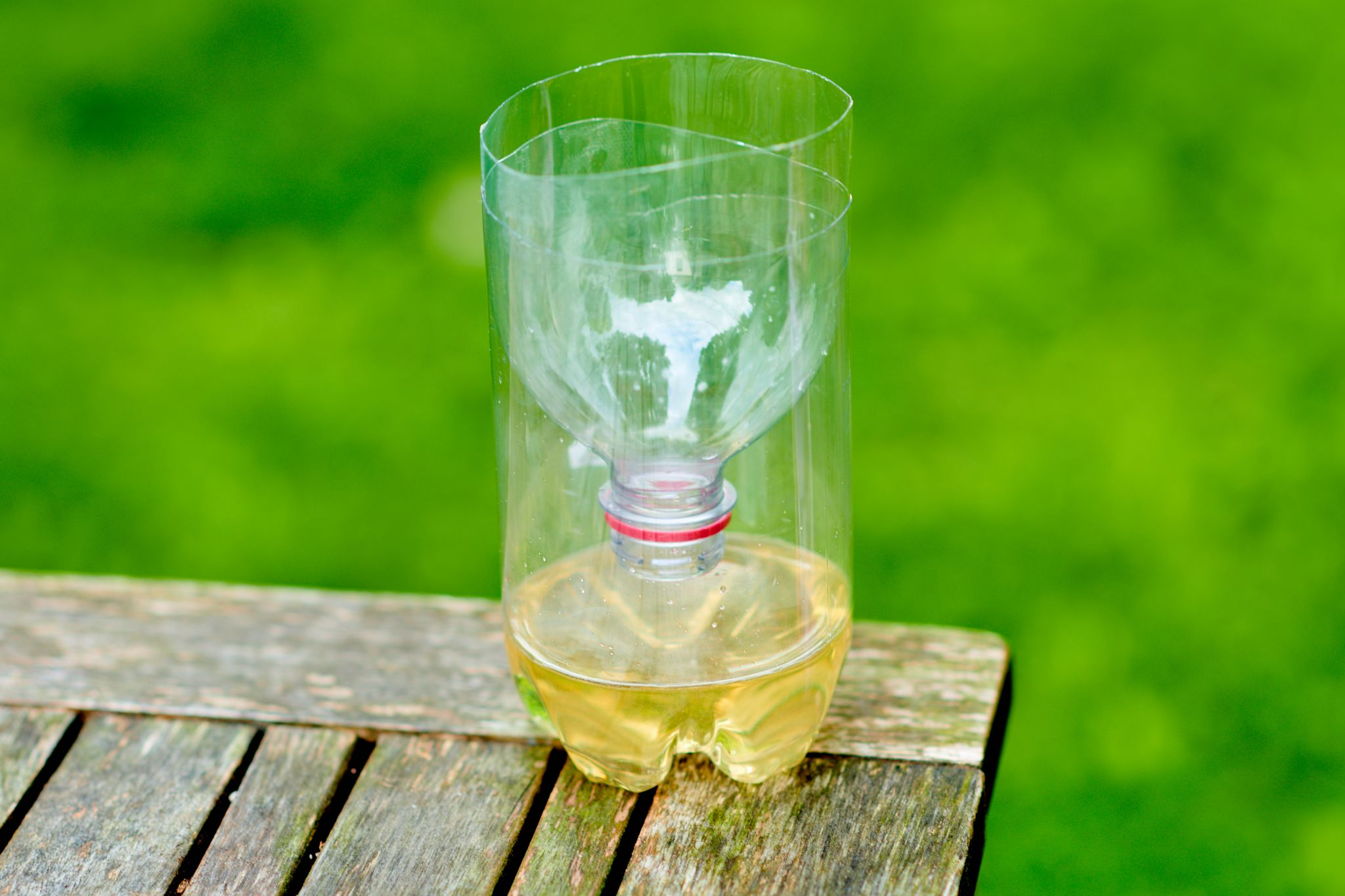 How To Make A DIY Wasp Trap – Homemade Bee Trap