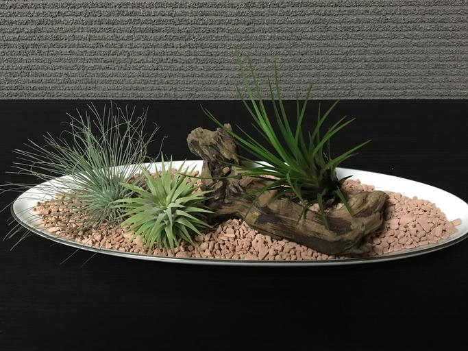 Top 8 Garden Expert Tips for Growing Air Plants that You shouldn't Miss!