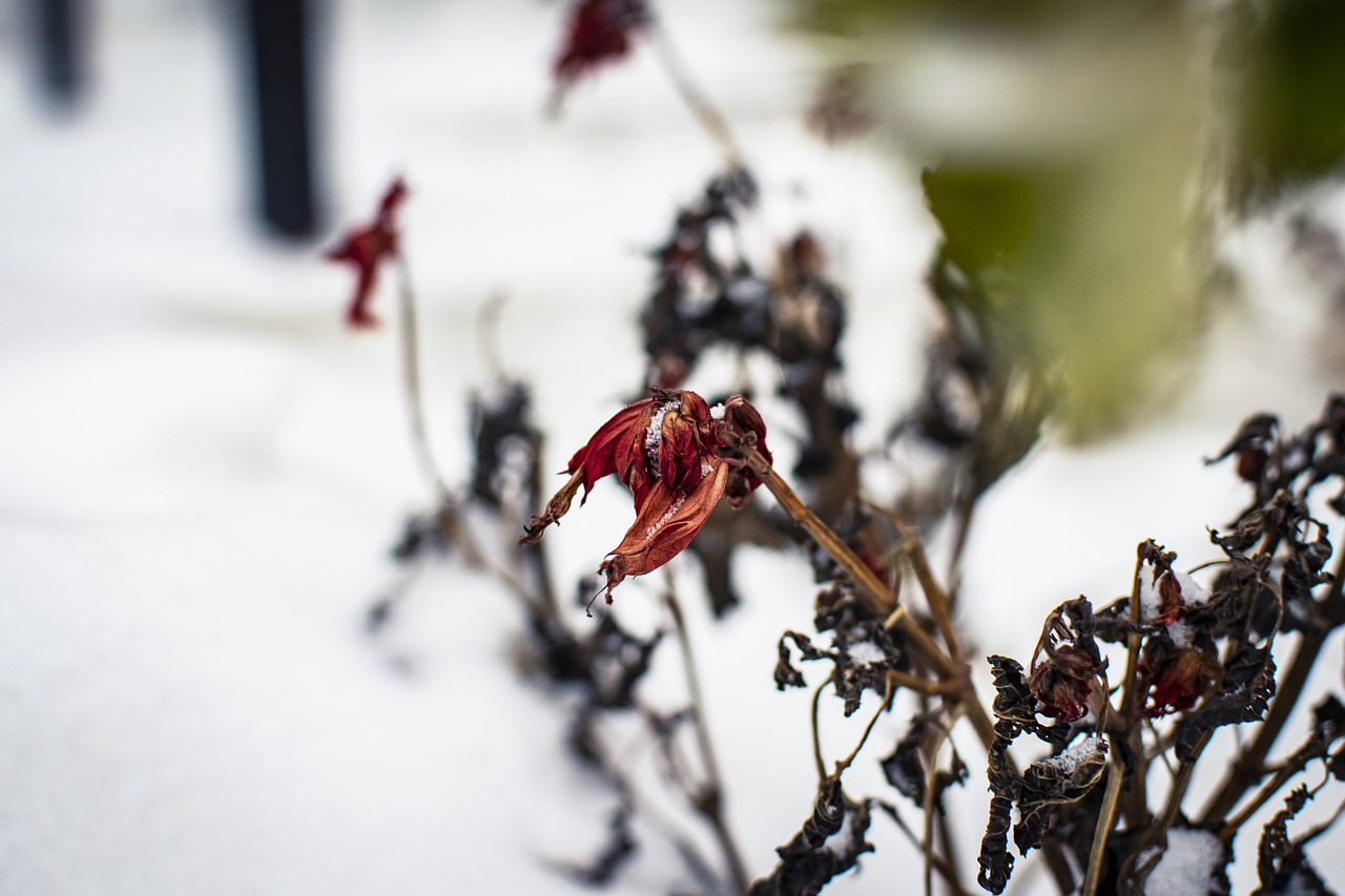 What Happens To A Plant If The Temperature Is Too Low?