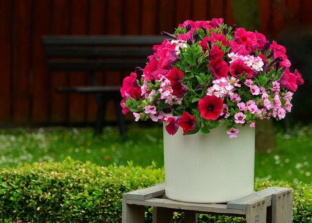 11 Best Hydroponics Flowers For Your Garden
