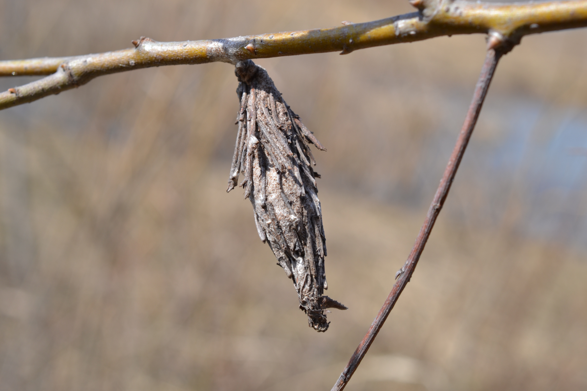 How to Get Rid of Bagworms Organically and Naturally