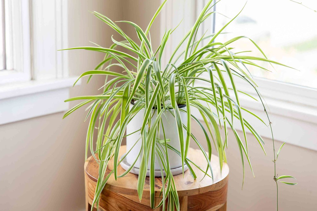 8 Houseplants that are safe for cats you must have in your home (Expert Recommendations)