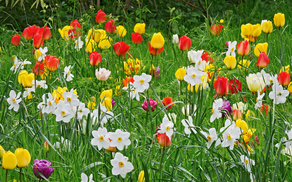 Top 9 Early Spring Flowers that are Easy to Grow (with Expert Suggestions)