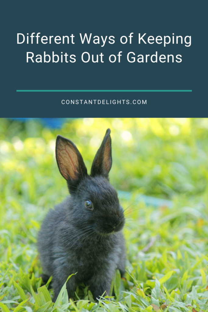 Different Ways of Keeping Rabbits Out of Gardens