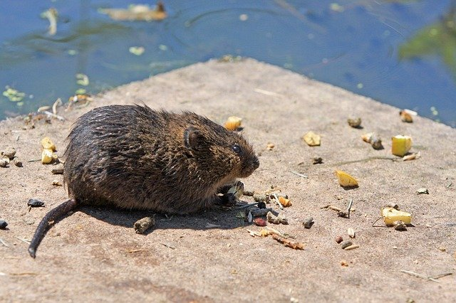 Top 20 Expert Tips on How to Get Rid of Voles