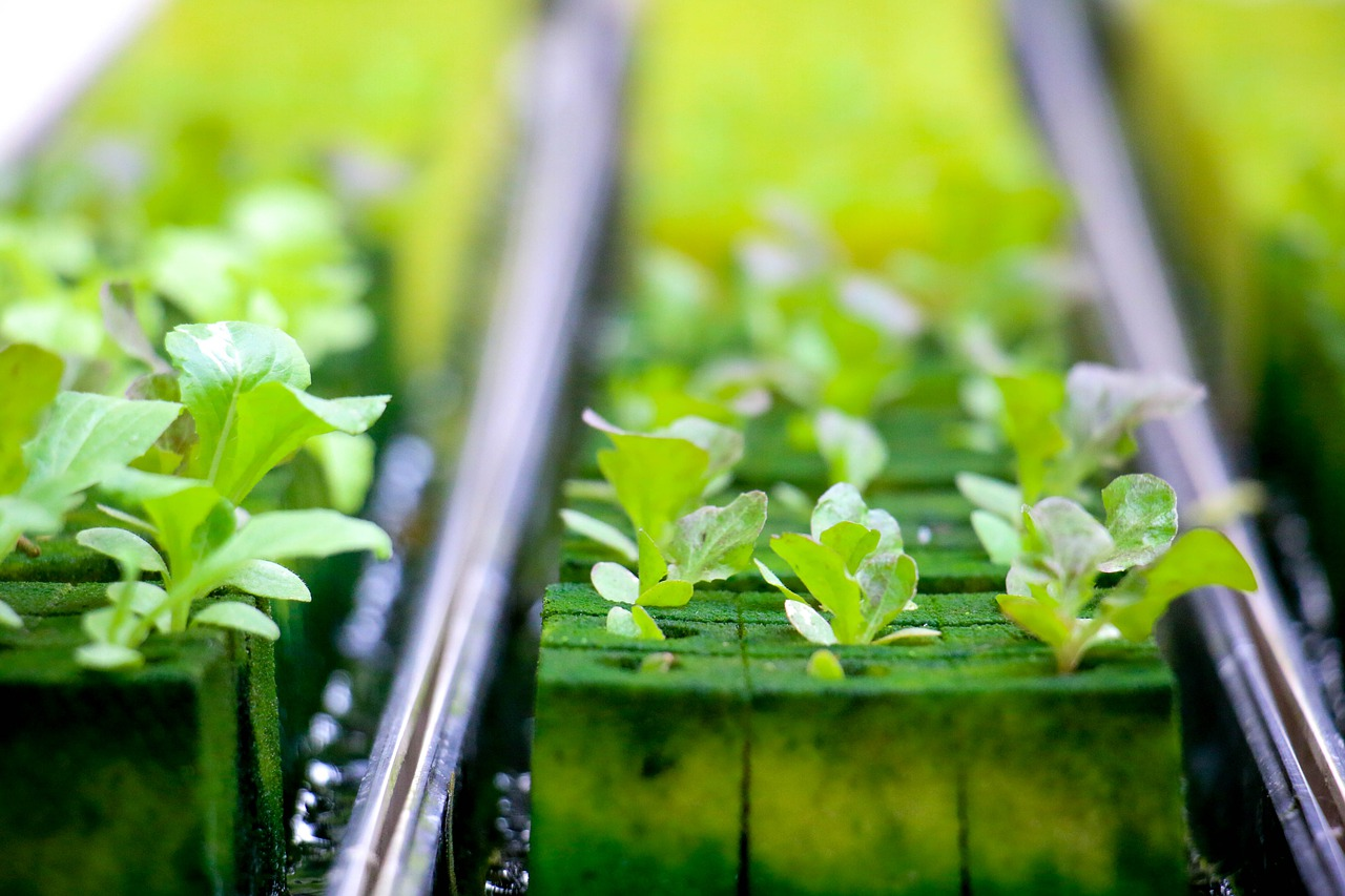 Top 19 Hydroponics Tips for Beginners from Experts that You shouldn't Miss