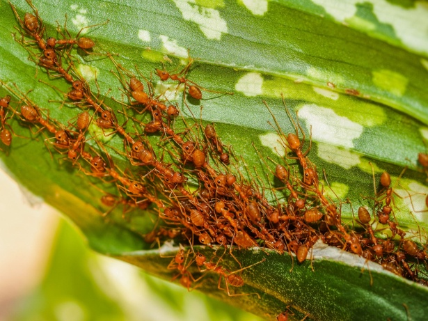 How To Get Rid Of Ants In The Garden?