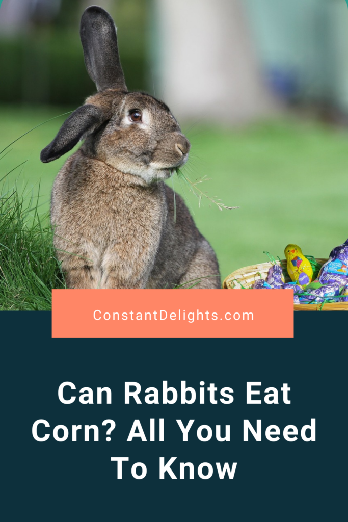 Can Rabbits Eat Corn? All You Need To Know
