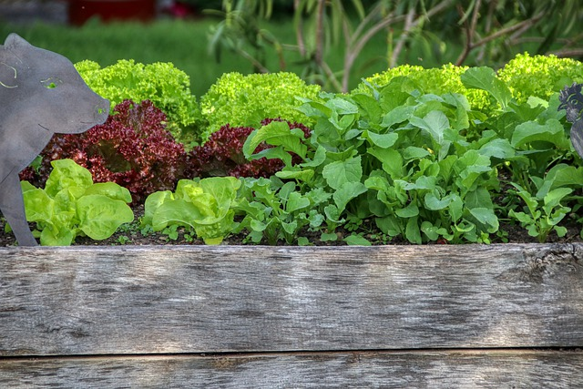 What are the steps, tips, and things to look out for when starting a garden?