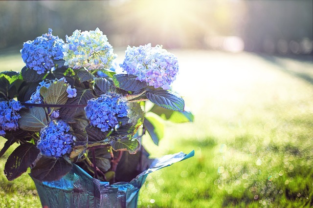 Top 9 Plants for Wet Areas Recommended by Garden Experts