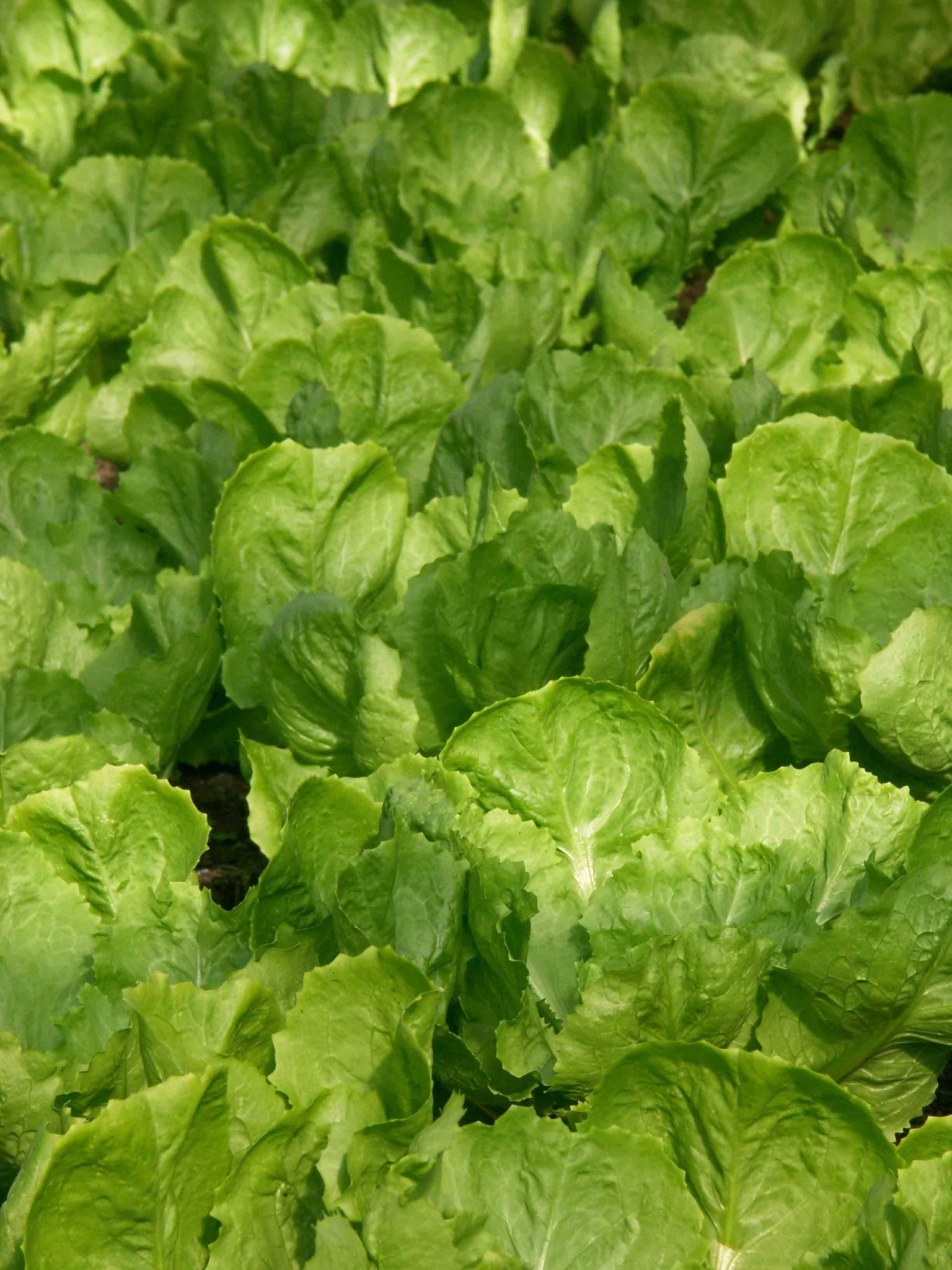 Top 9 Most Profitable Crops For Greenhouse Growers