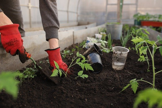 How To Kill Grass In Flower Beds: 3 Best Tips For Every Gardener