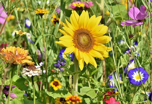 How To Kill Grass In Flower Beds: 3 Best Tips For Every ...