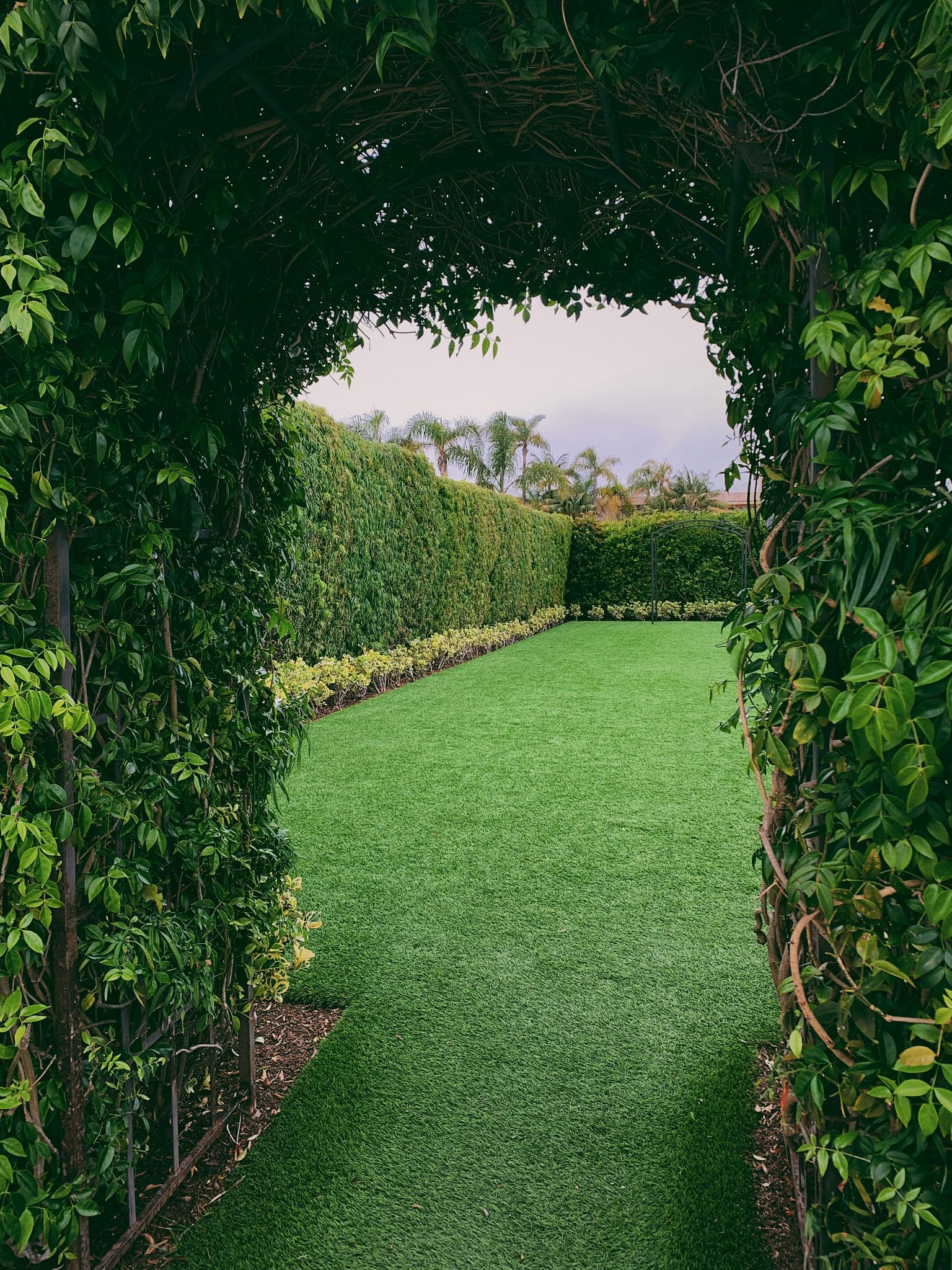 Comprehensive Grass Seed Reviews For Gardeners