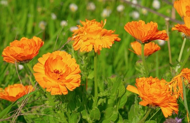 Top 9 Best Plants that Repel Snakes Recommend by Garden Experts