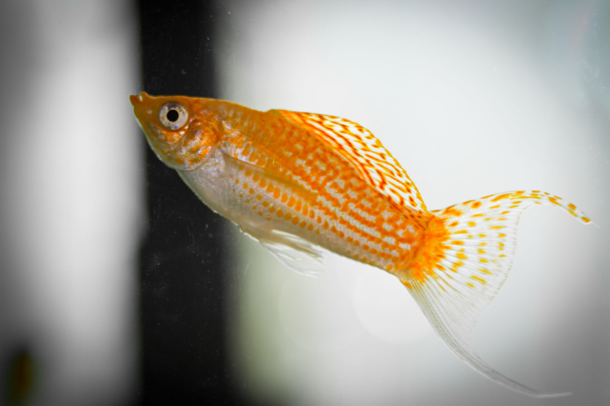 Expert Recommendations for Top 8 Best Fish for Aquaponics
