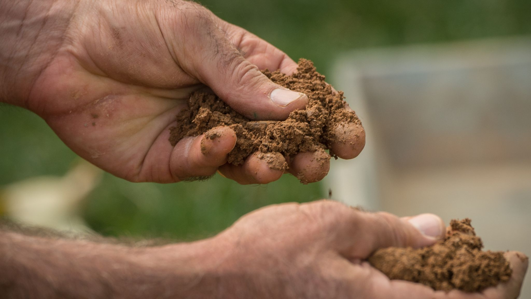 Plant Food Vs. Fertilizer: Understand Their Differences