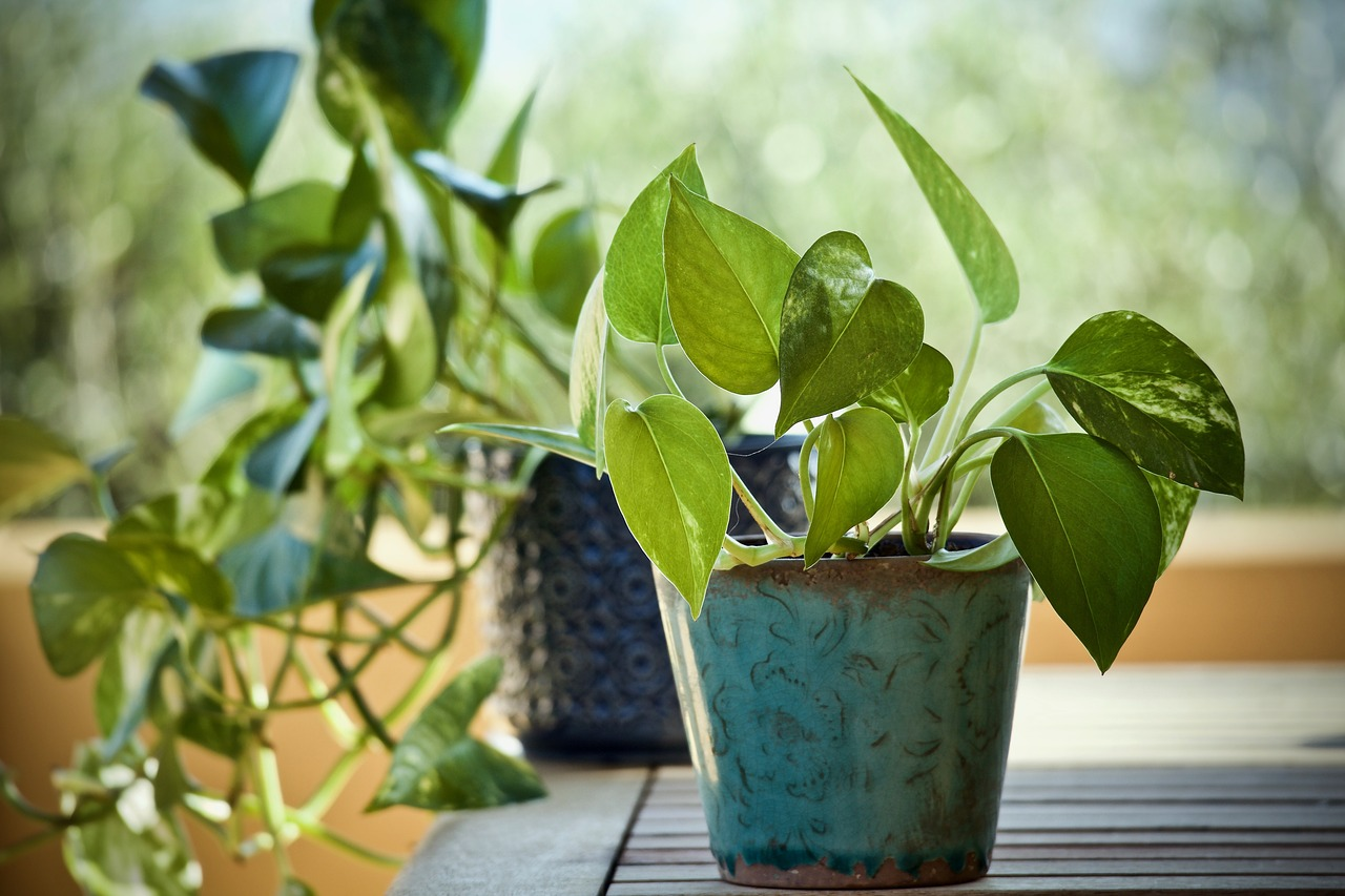 21 Best Plants Good for Asthma (Expert Recommendations)