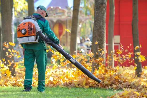 Explore The Best Leaf Vacuum: Time To Clean Up Your Garden!