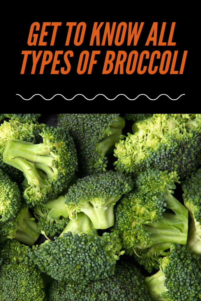 Get To Know All Types Of Broccoli In Some Minutes