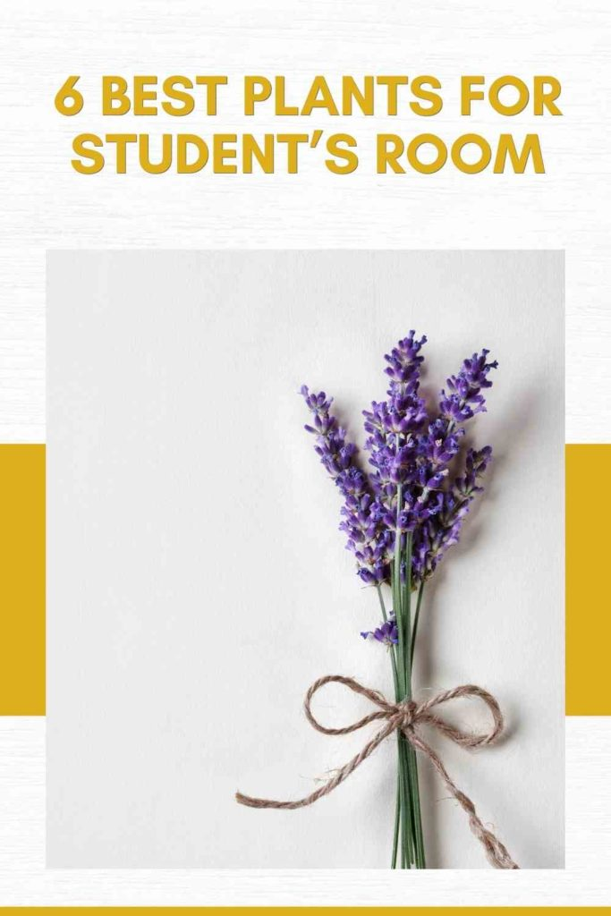 6 Best Plants for Student's Room
