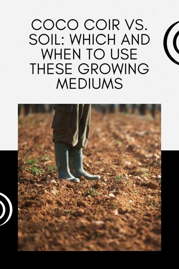 Coco Coir vs. Soil: Which And When To Use These Growing Mediums