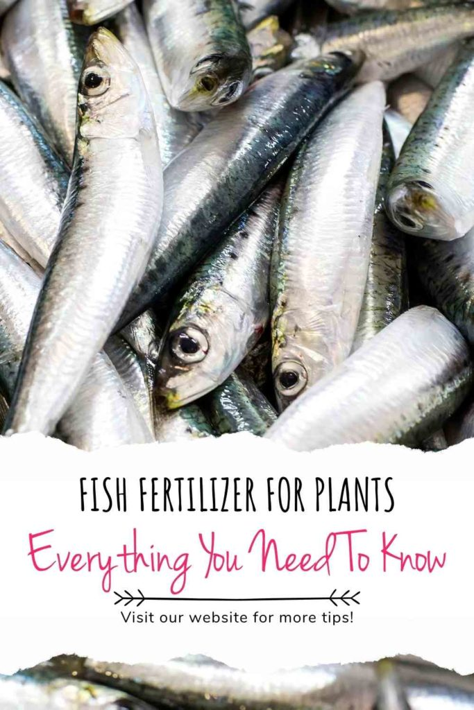Fish Fertilizer For Plants: Everything You Need To Know