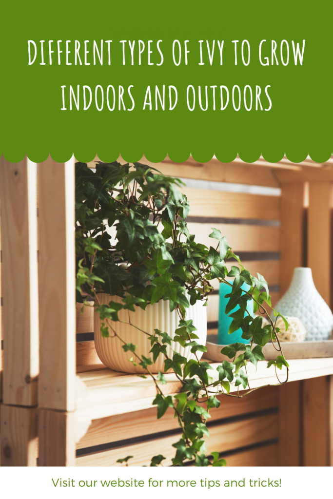 Different Types Of Ivy To Grow Indoors And Outdoors