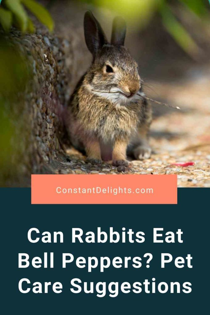 Can Rabbits Eat Bell Peppers? Pet Care Suggestions