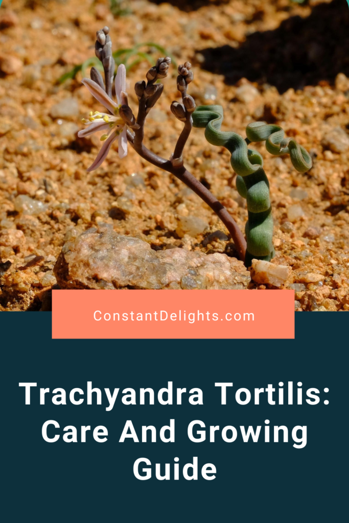 Trachyandra Tortilis: Care And Growing Guide