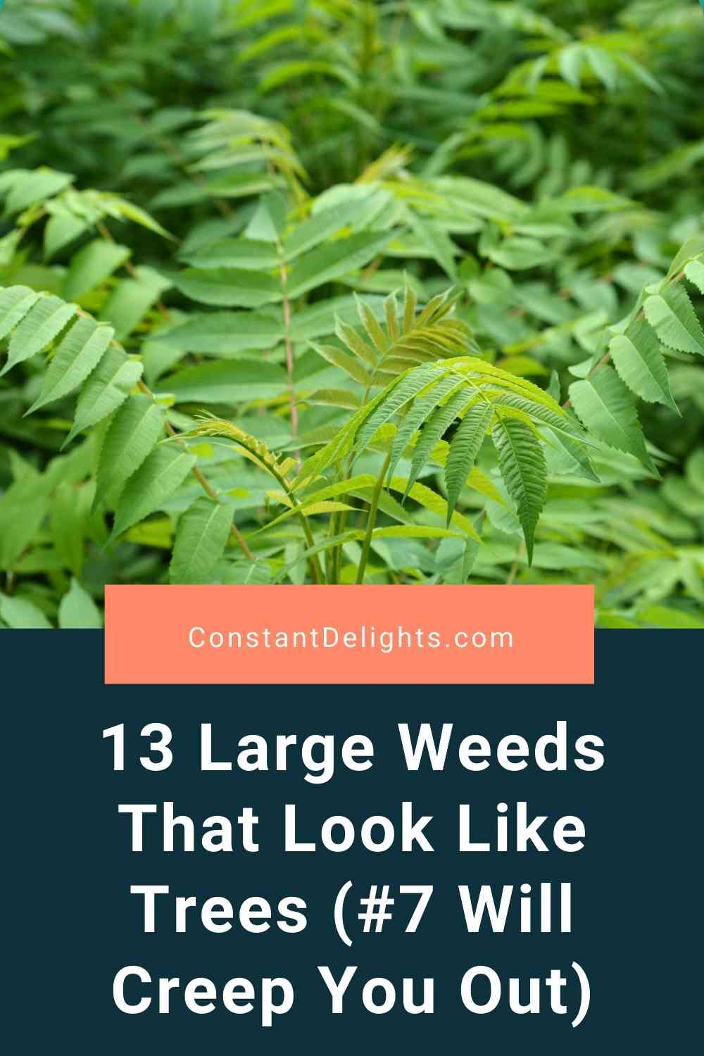 13 Large Weeds That Look Like Trees (#7 Will Creep You Out)