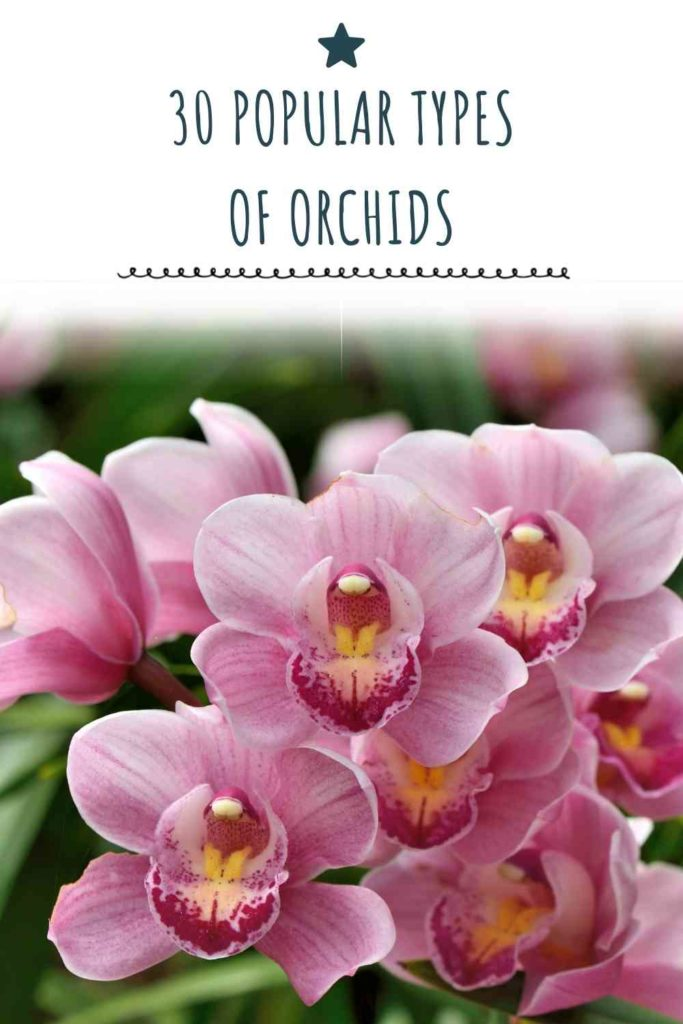 30 Popular Types Of Orchids: Blessing From Mother Nature