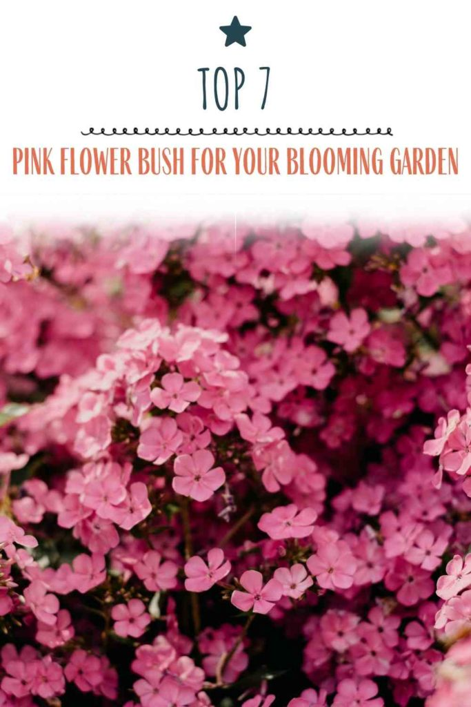 Top 7 Best Pink Flower Bush for Your Blooming Garden (Expert Recommendations)