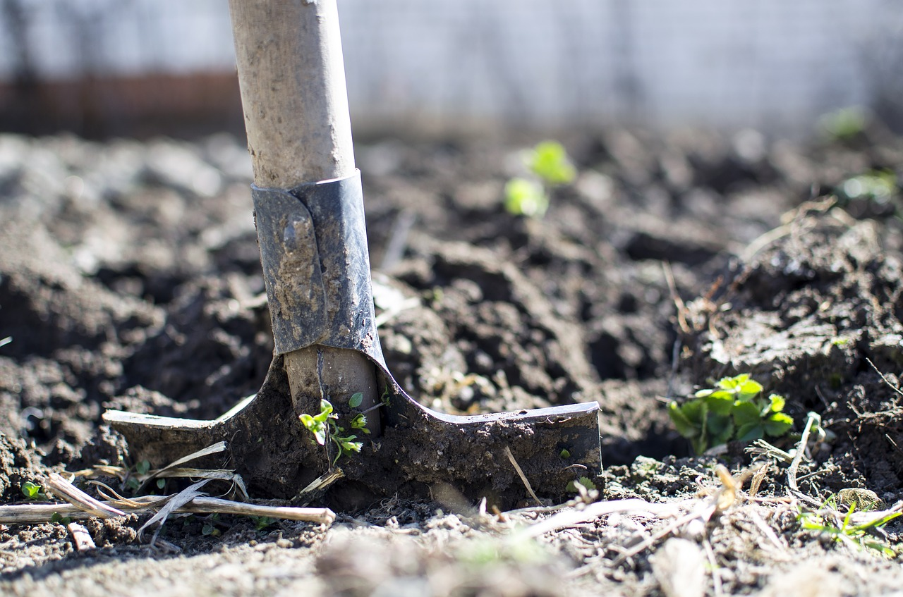 A Complete Guide On How To Sterilize Large Amounts Of Soil