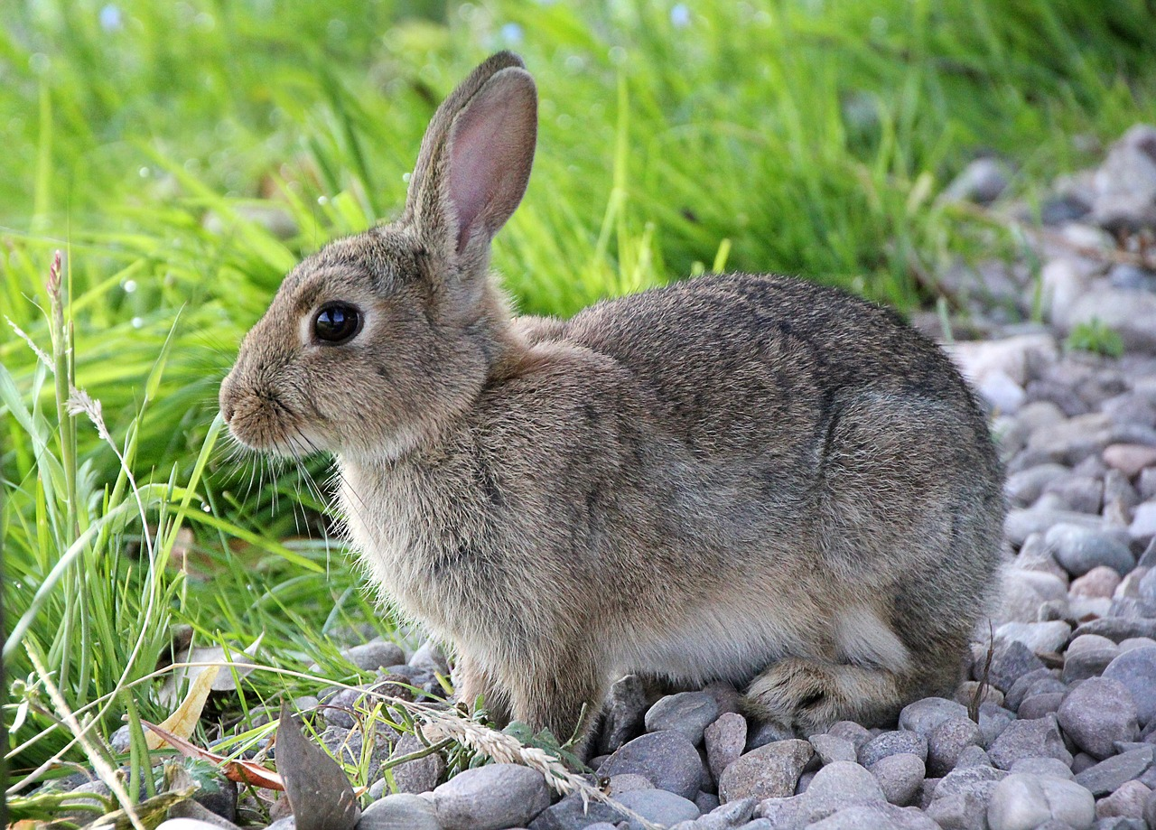 Do Rabbits Eat Grass? Is Grass Healthy to Eat?