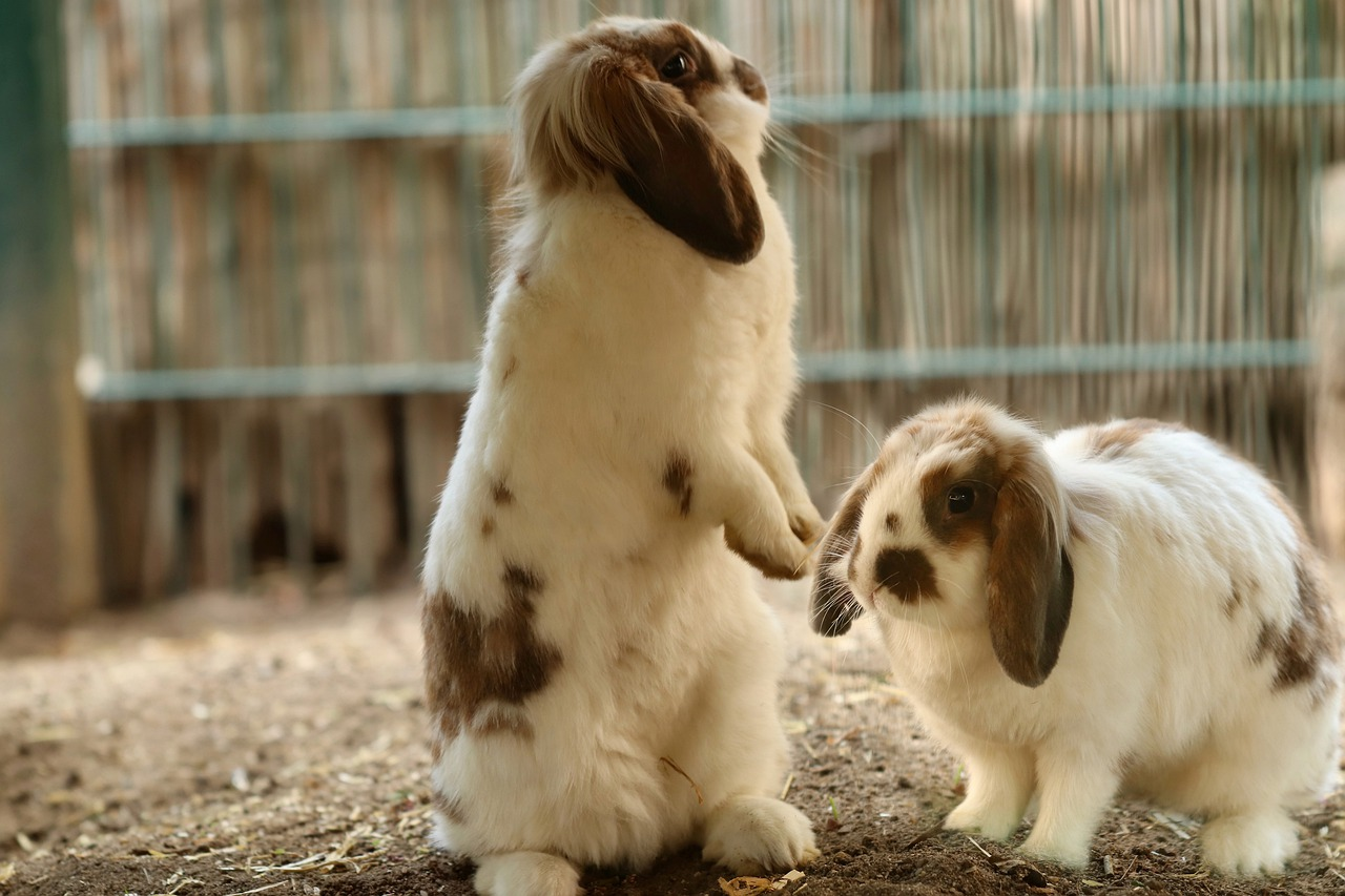 Can Rabbits Eat Radishes? - Crucial To Take Care Of Your Pets