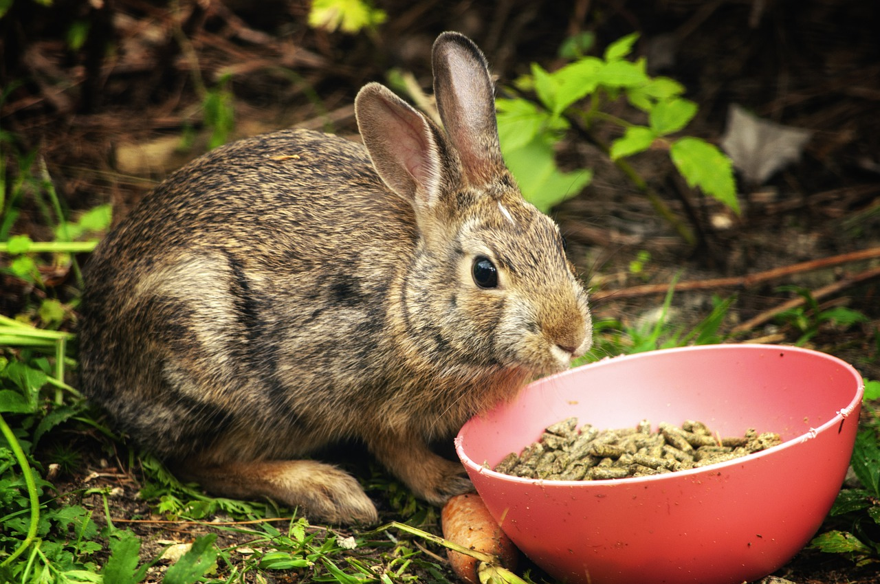 What To Feed Wild Rabbits To Keep Them Healthy?