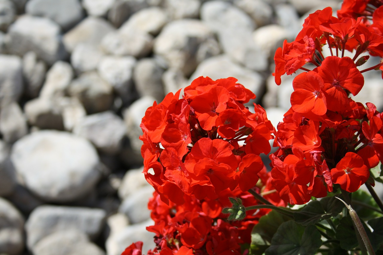 Top 7 Best Red Perennial Flowers for Your Summer Garden (Expert Recommendations)