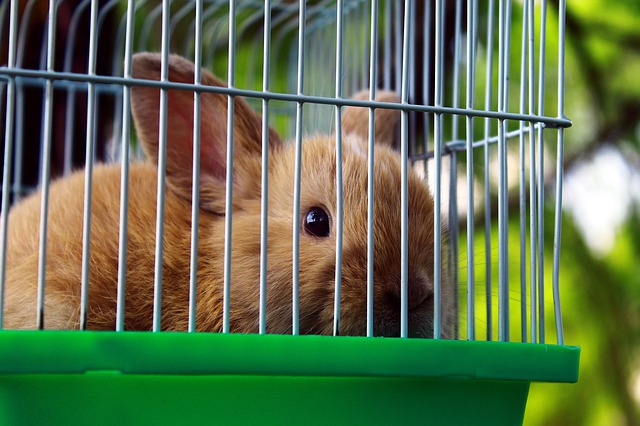 How To Keep Rabbit's Cage Clean: 5 Tips That Work