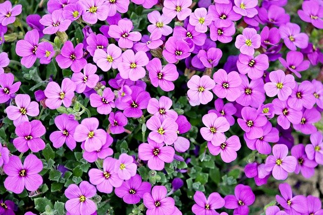 How To Plant Gorgeous Purple Perennial Flowers For Beginners