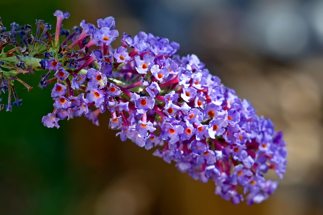 Top 10 Best Summer Flowering Shrubs that You shouldn't Miss (Expert Recommendations)