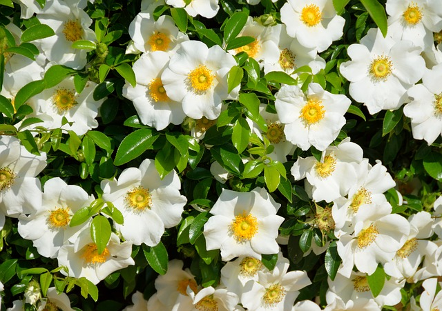 Top 12 Best Smelling Flowers to Plant in Your Garden (According to Garden Experts)