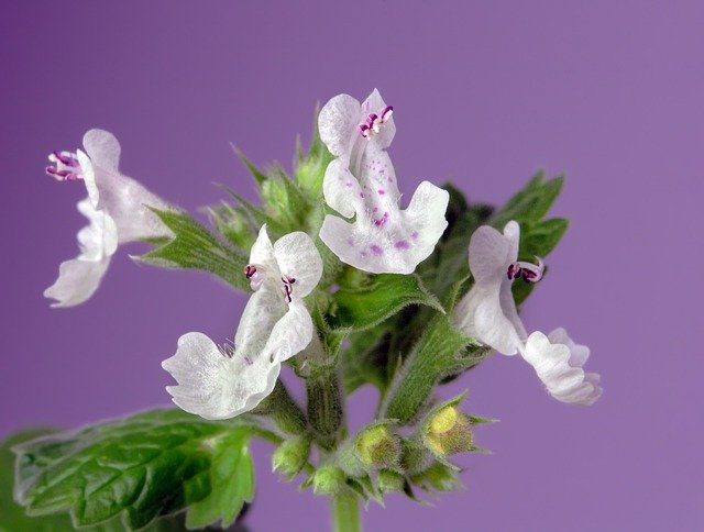 15 Plants that Repel Mosquitoes (Best Anti Mosquito Plants)