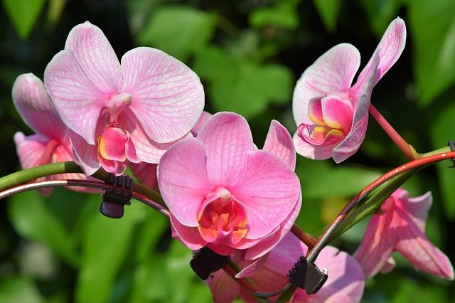 Top 10 Best Plants Don't Need Soil that You can Grow Easily (Expert Recommendations)