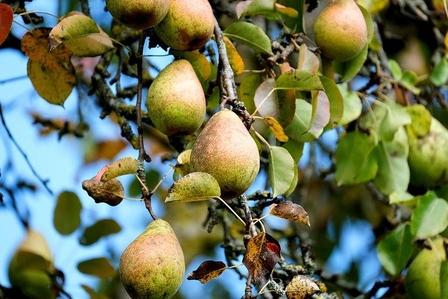 Top 10 Fastest-Growing Fruit Trees for Your Garden (with Expert Suggestions)