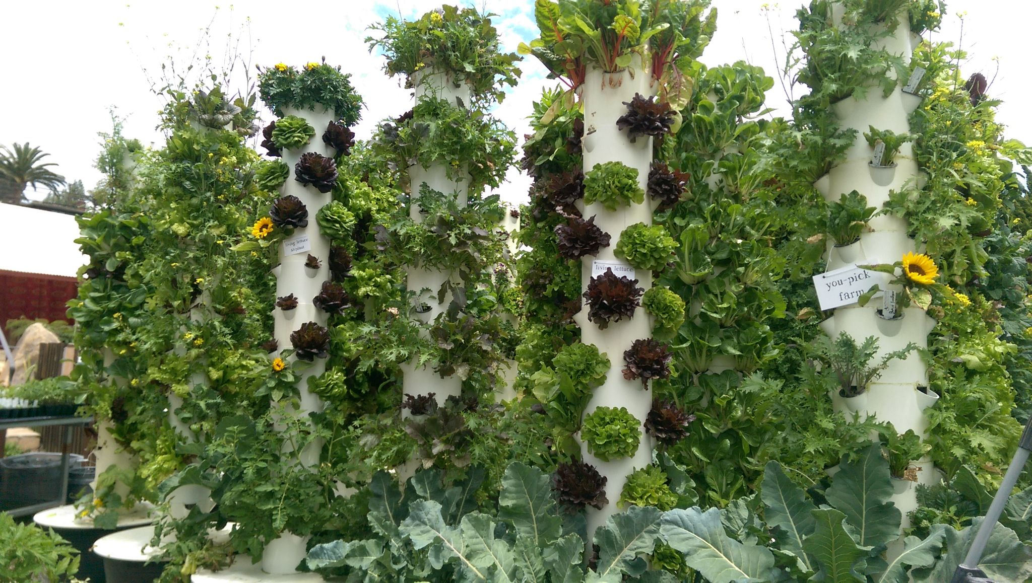 More Than A Trend: Why Hydroponic Produce Is The Future of Growing