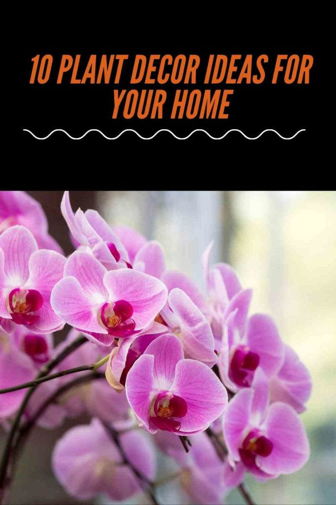 10 Plant Decor Ideas for Your Home