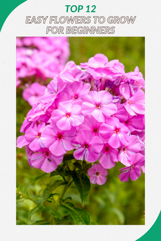 Top 12 Best Easy Flowers to Grow for Beginners (Expert Recommendations)